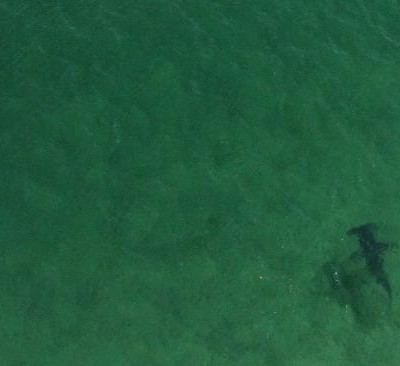 Perth marine biologist proposes drone plan to spot sharks