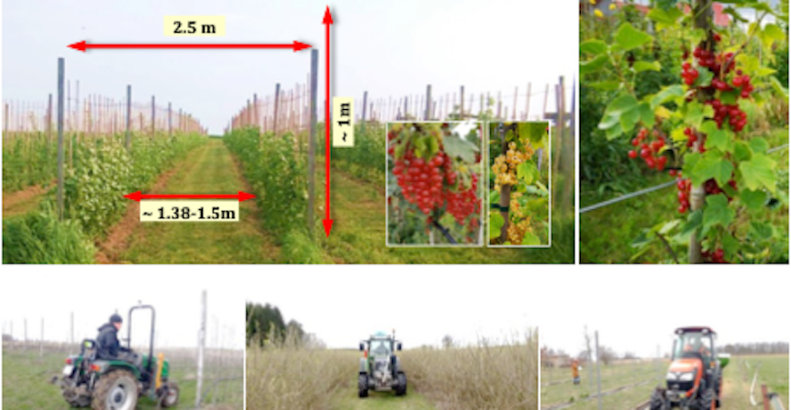 Figure 1 Shrubbery orchards: dimensions and environmental variation (Source: Weggun)