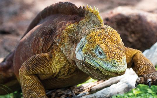 bio div land iguana seymour norte n8b1486 49979692366 o